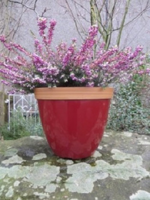 "10"" Provence Plastic Planter (ruby red)"