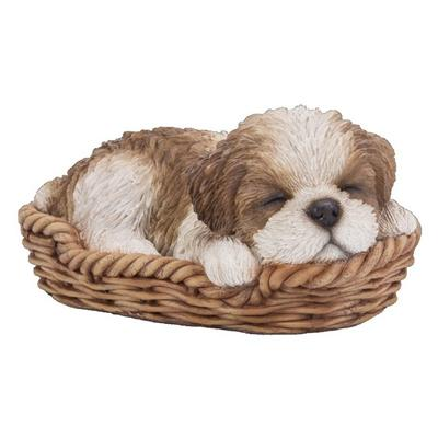 Pp Brown Shihtzu Puppy/Basket